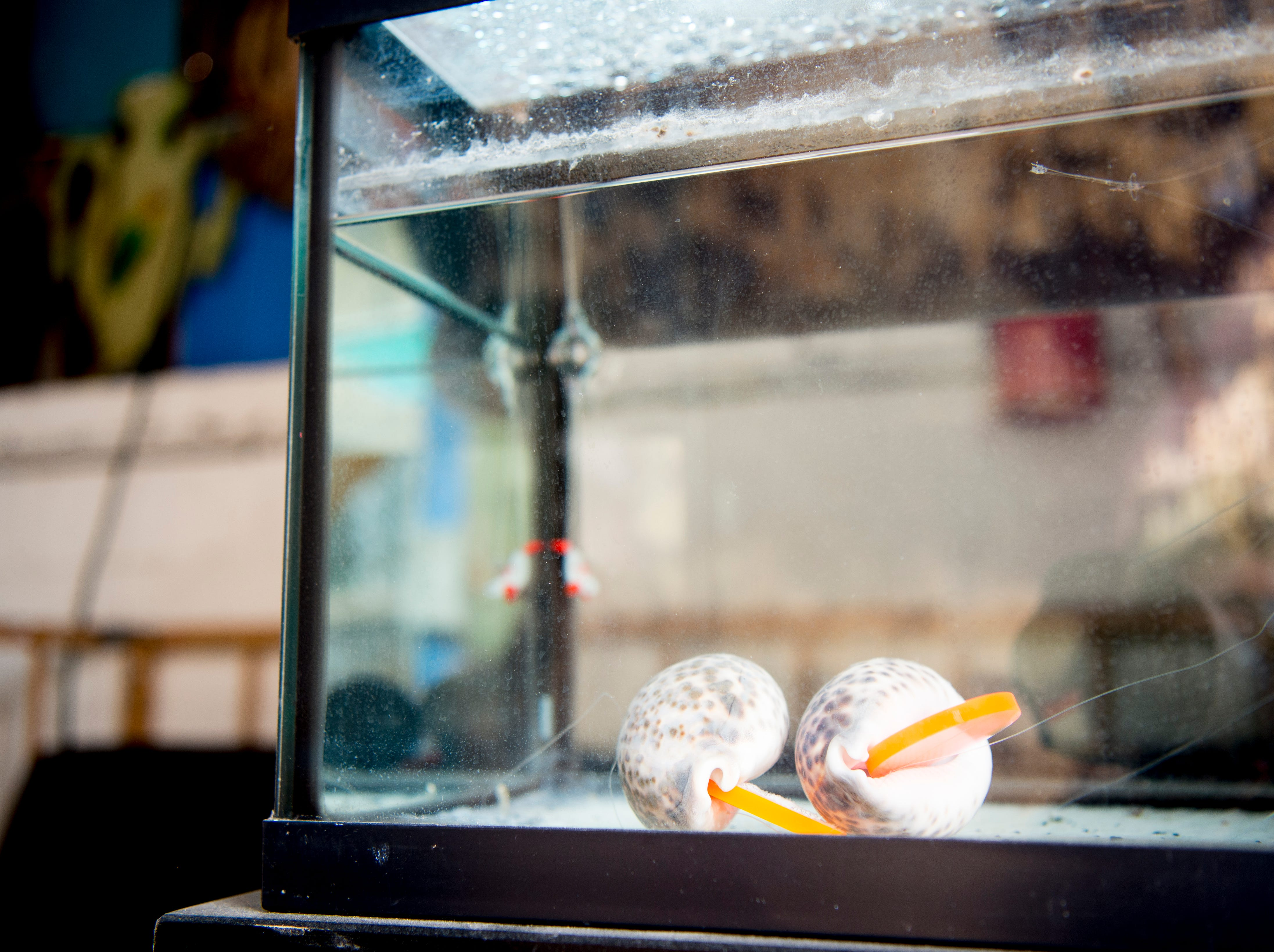 A fish tank stands beside the entrance at Bar Marley in Knoxville, Tennessee on Thursday, February 14, 2019. The Caribbean-themed Bar Marley is facing possible acquisition and condemnation by KCDC due to code violations.