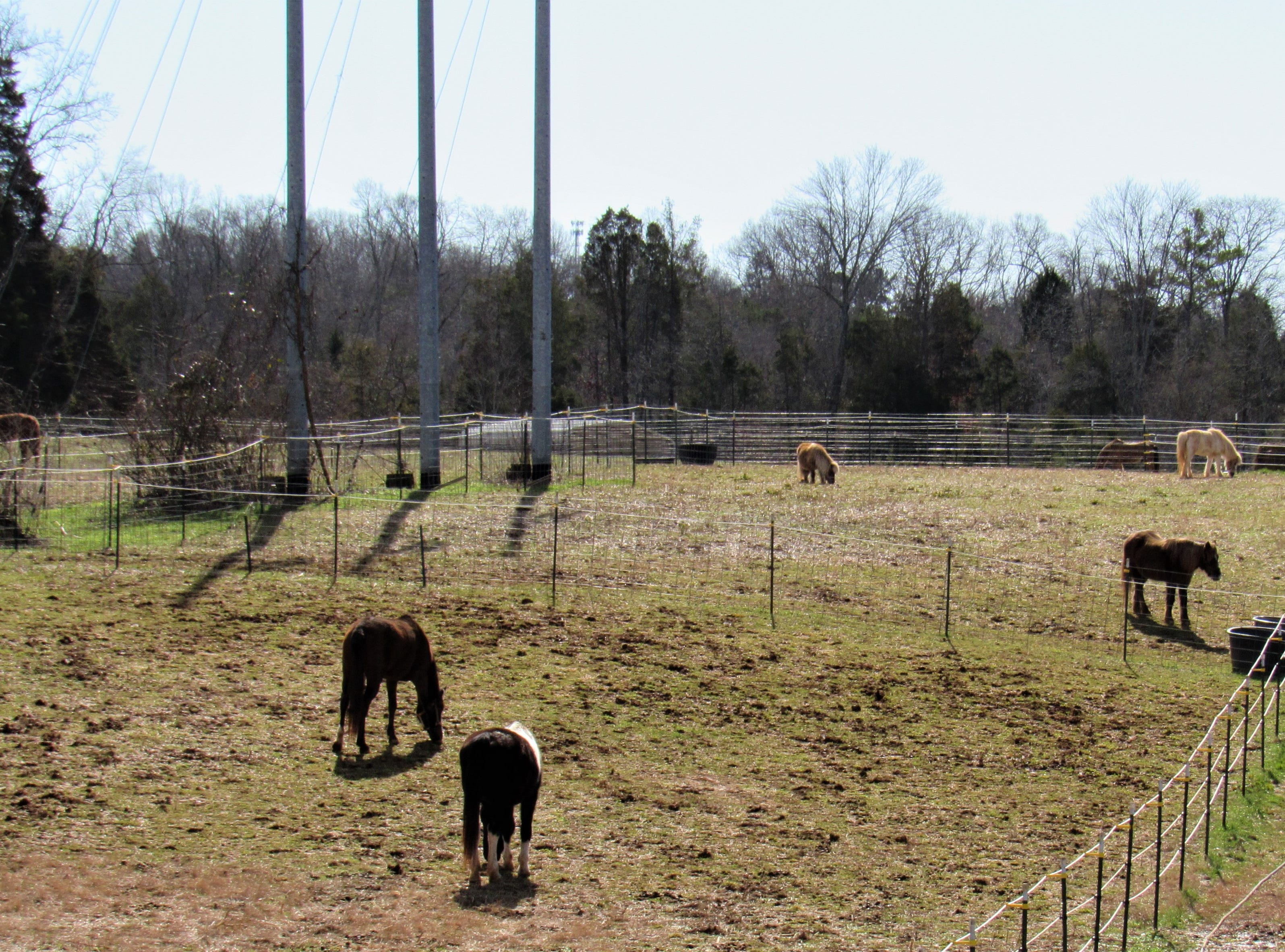 Horses are turned out to pasture daily, weather permitting.