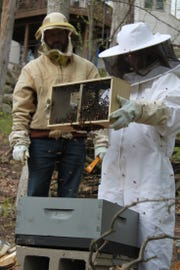 Steven Kish, from Brighton, watches his daughter Brooklyn, 18, as she puts her beehive into a box. The family has three hives.