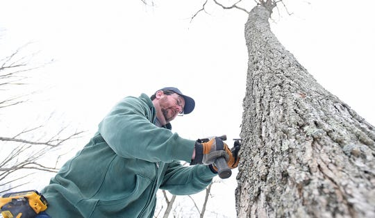 Natural resources technician Brian Miller taps a tree at Malabar Farm State Park on Thursday.