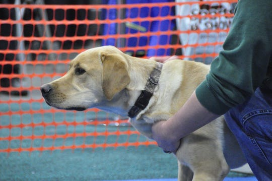 Milwaukee Journal Sentinel Sports Show fastest retriever contest.