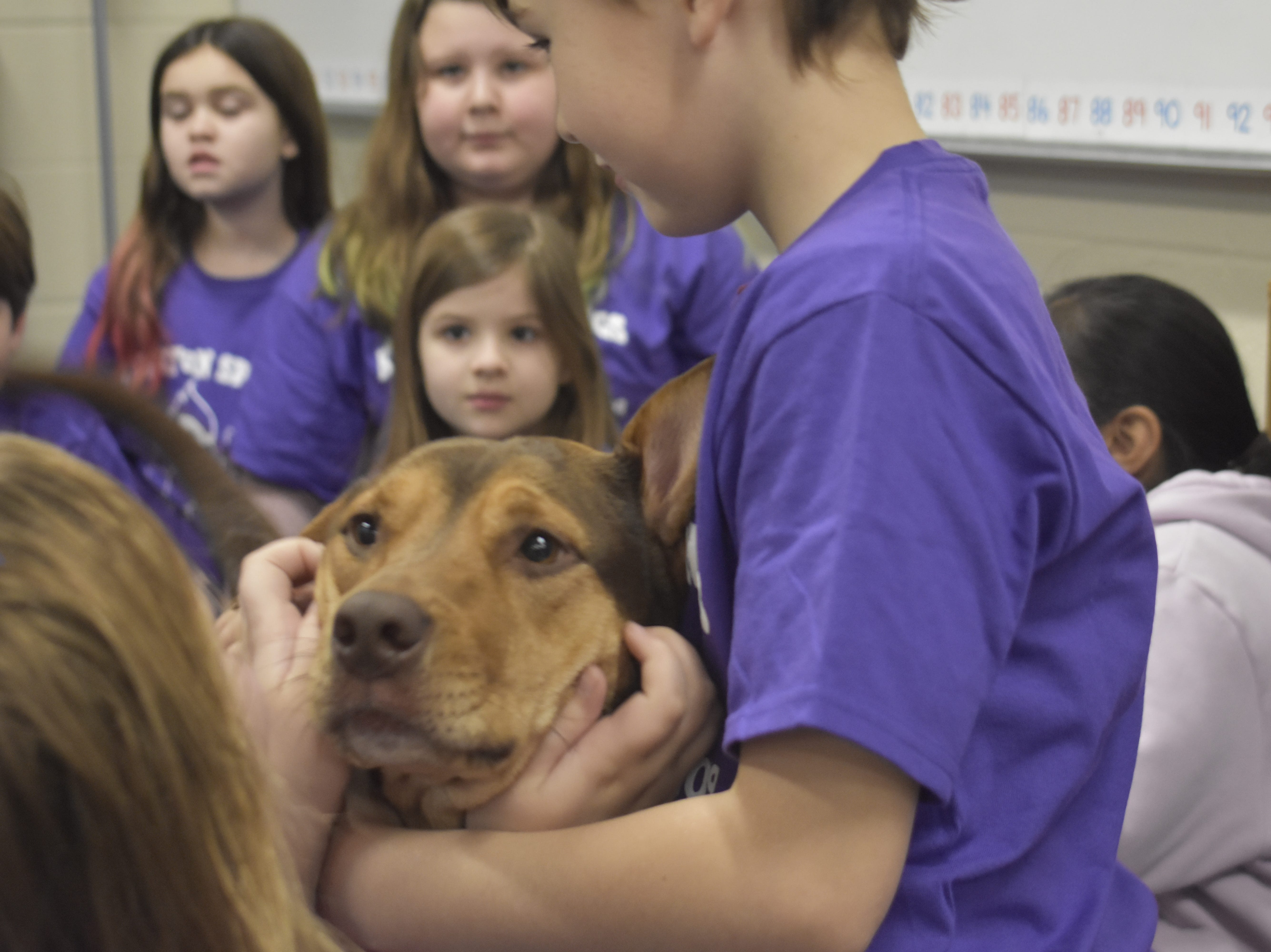 Shelby, former Cheatham County Animal Control shelter dog, visits students at Kingston Springs Elementary School after starring in 'A Dog's Way Home.'