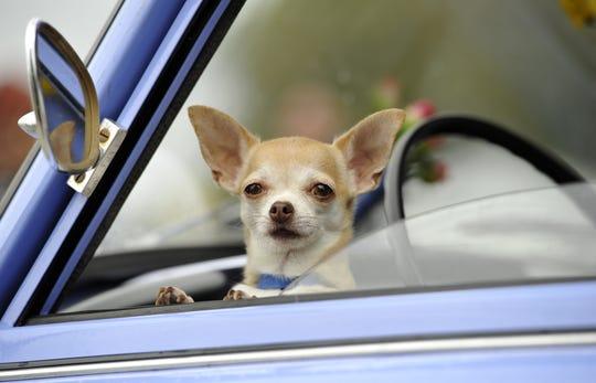 Ni dejándole abierta la ventana podría salvar a un perro de morir bajo el fuerte sol de Arizona en verano.