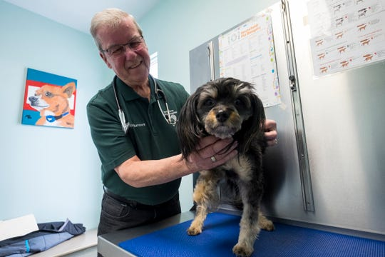 William Burrows holds Peppers, a 5-year-old dog with a deformed foot, on an exam table Thursday, Feb. 14, 2019 in an exam room at North River Animal Hospital in Fort Gratiot. Burrows, who opened the clinic in 1974, retired in December 2018.