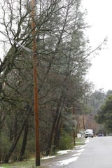 Trees and their branches lean up against power lines in Shasta Lake on Thursday, Feb. 14, 2019. Branches and trees making contact with power lines needed to be removed before electricity could be restored.