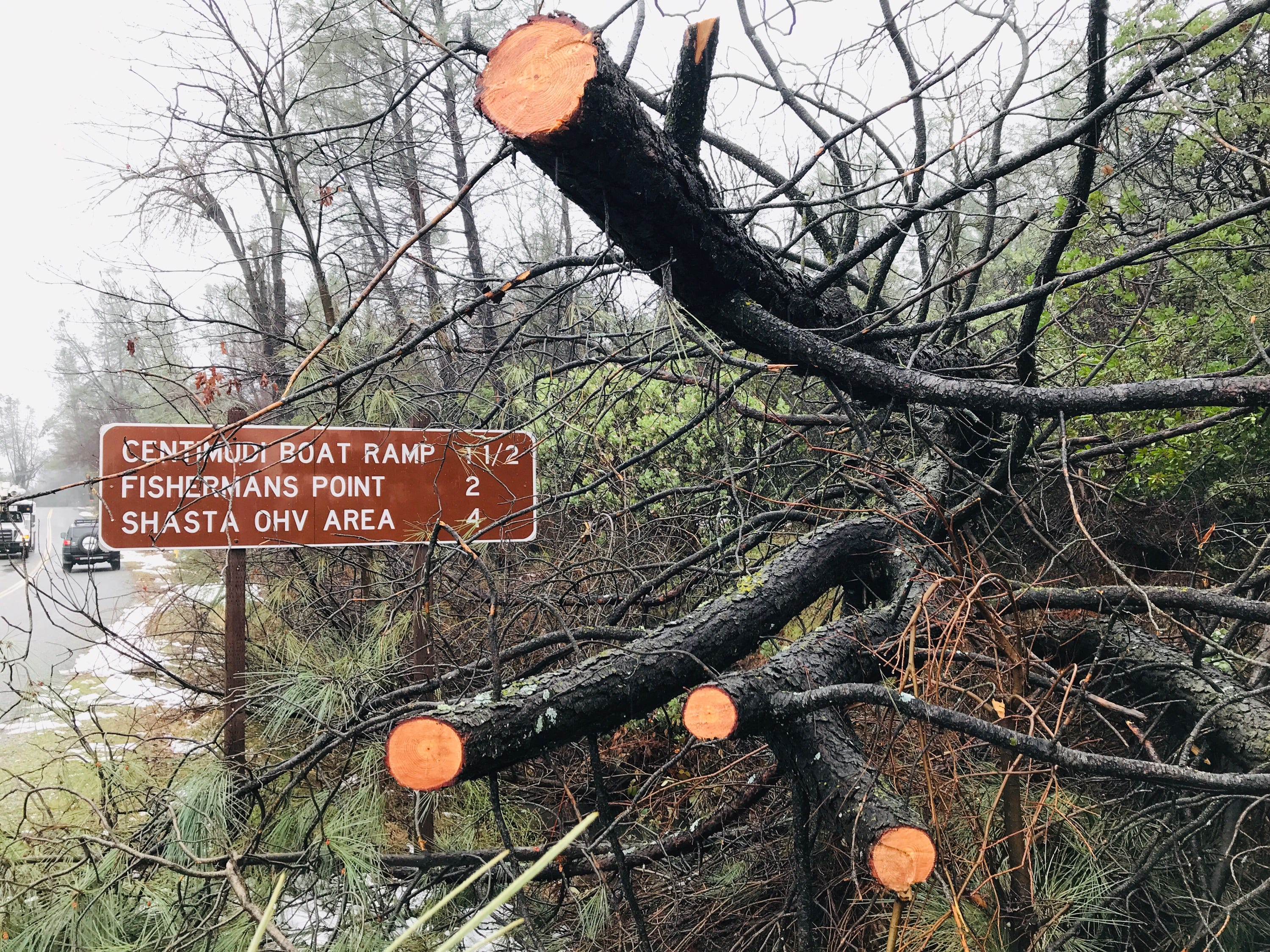 The Feb. 13, 2019 winter storm that hit Northern California knocked down these trees leading to Shasta Dam just north of Redding.