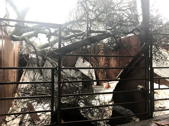 Wednesday morning's snow storm caved in part of the roof of a horse barn at Exodus Farms in Anderson.