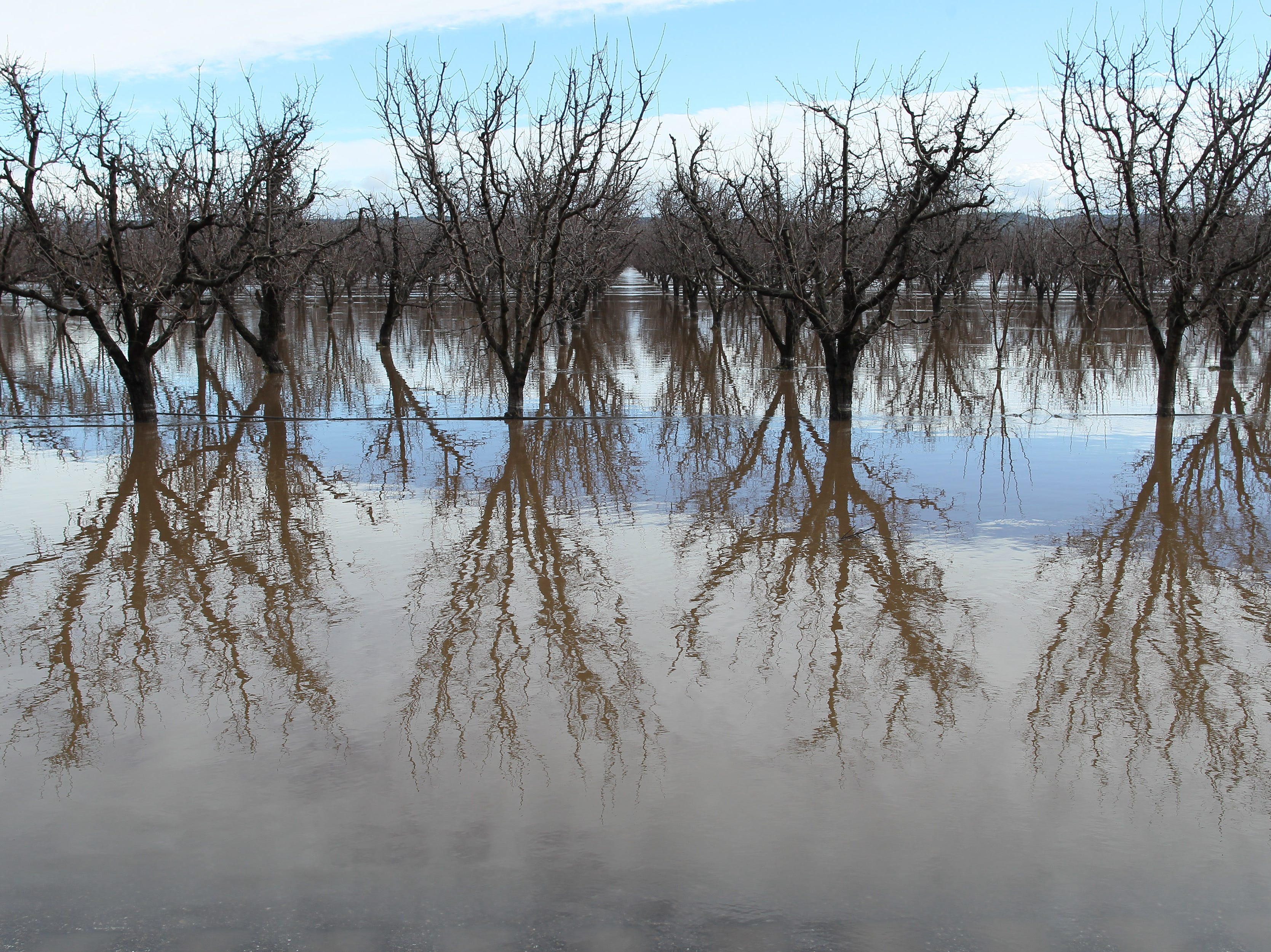 Flooded field of the orchard along Hwy. 99 east of Red Bluff.
