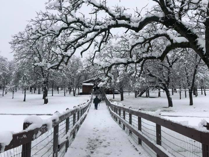 Palo Cedro was covered in snow after a winter storm on Wednesday, Feb. 13, 2019.