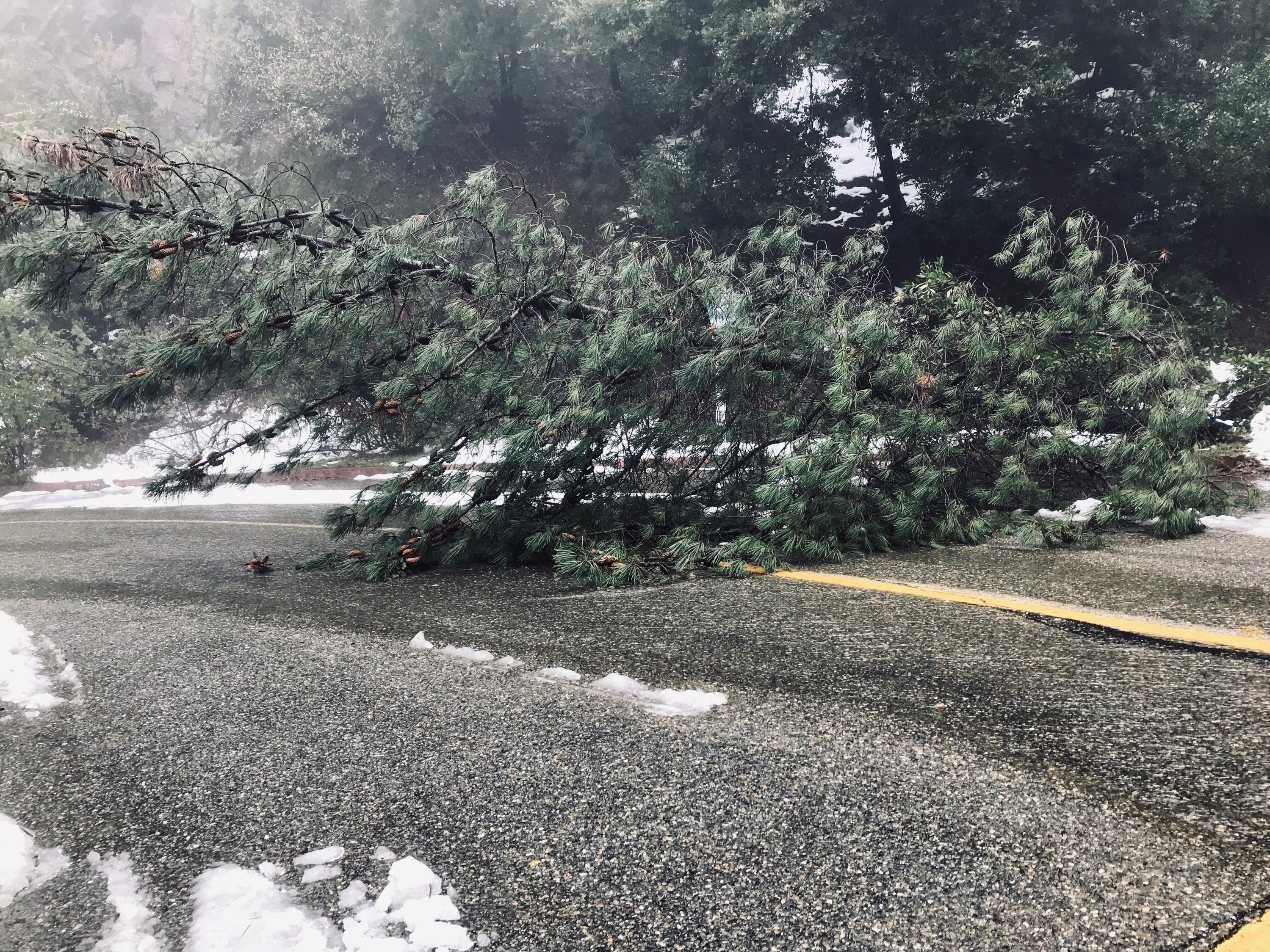 A large tree on Thursday, Feb. 14, 2019 blocks the overflow parking lot entrance at Centimudi boat ramp at Lake Shasta.
