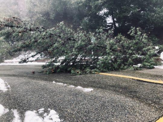 A large tree on Thursday, Feb. 14, 2019 blocks the overflow parking lot entrance at Centimudi boat ramp at Lake Shasta.