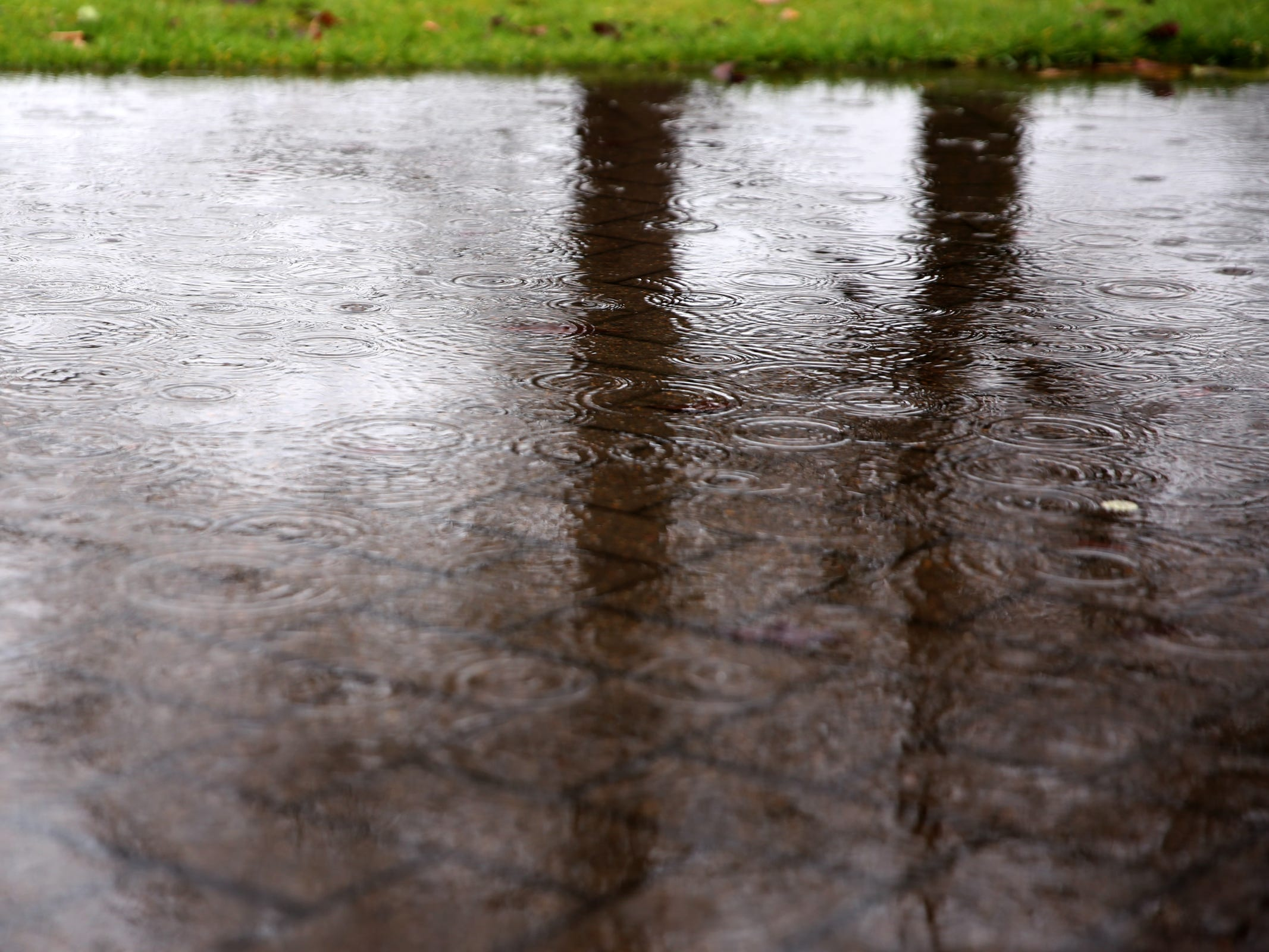 Trees are reflected in a puddle as rain falls in Salem on Thursday, Feb. 14, 2019.