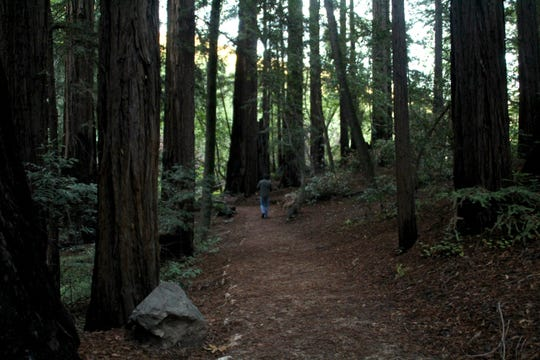 Pfeiffer Big Sur State Park offers trails with beautiful views of the Pacific Ocean.