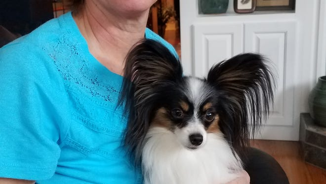 "Lori Ashe with ""Fly"" who is a 4 year old Papillon."