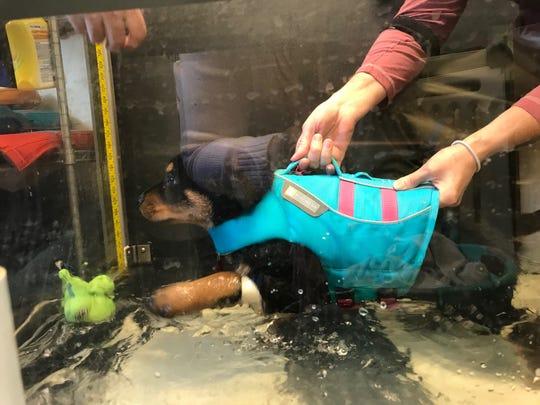 Lochte walking in the water tank