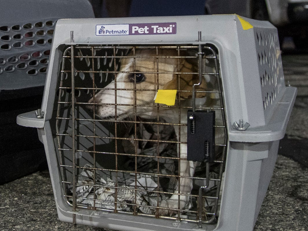 A rescue dog waits to get checked and then transported to a metro Detroit Michigan Humane Society facility for adoption at Willow Run Airport in Ypsilanti Township, Thursday, Feb. 14, 2019.