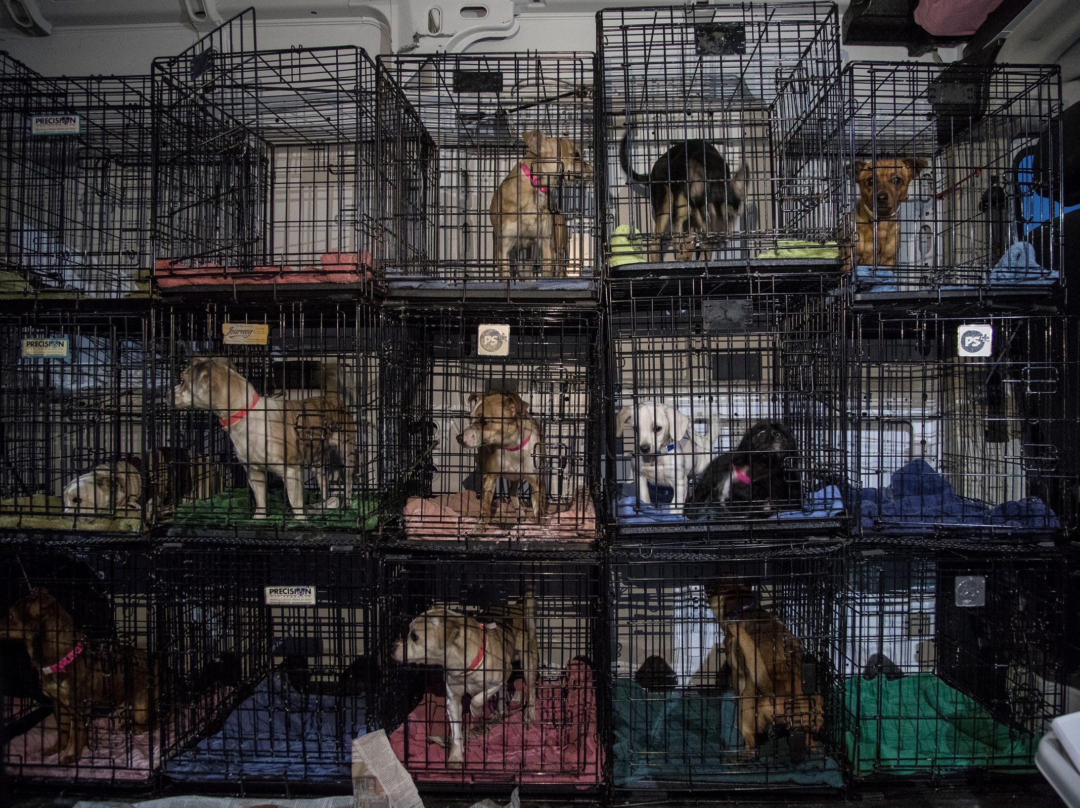 Around 91 rescue dogs wait to get transported to a metro Detroit Michigan Humane Society facilities for adoption at Willow Run Airport in Ypsilanti Township, Thursday, Feb. 14, 2019.