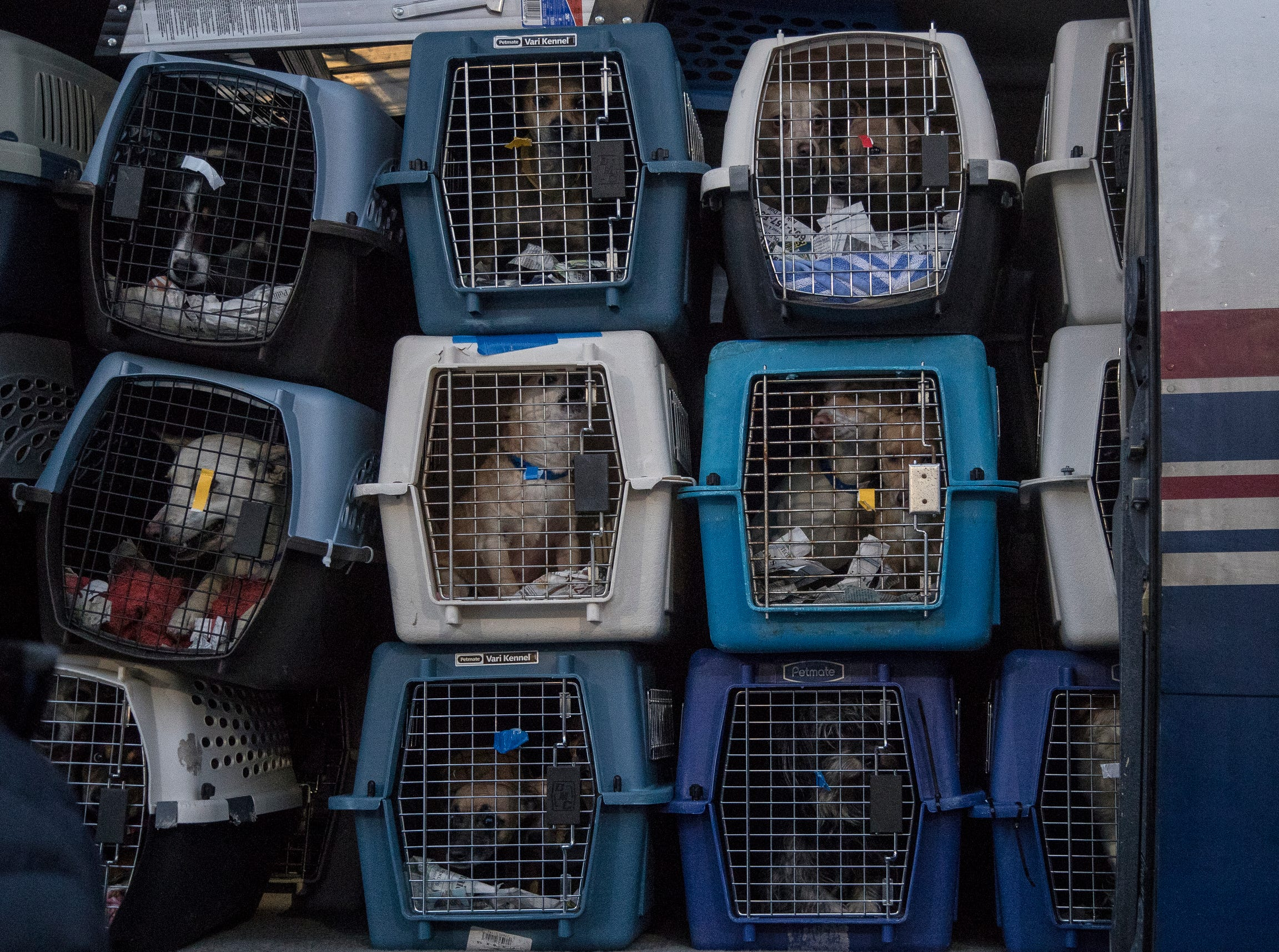 Around 91 rescue dogs wait to get transported to a metro Detroit Michigan Humane Society facility for adoption at Willow Run Airport in Ypsilanti Township, Thursday, Feb. 14, 2019.