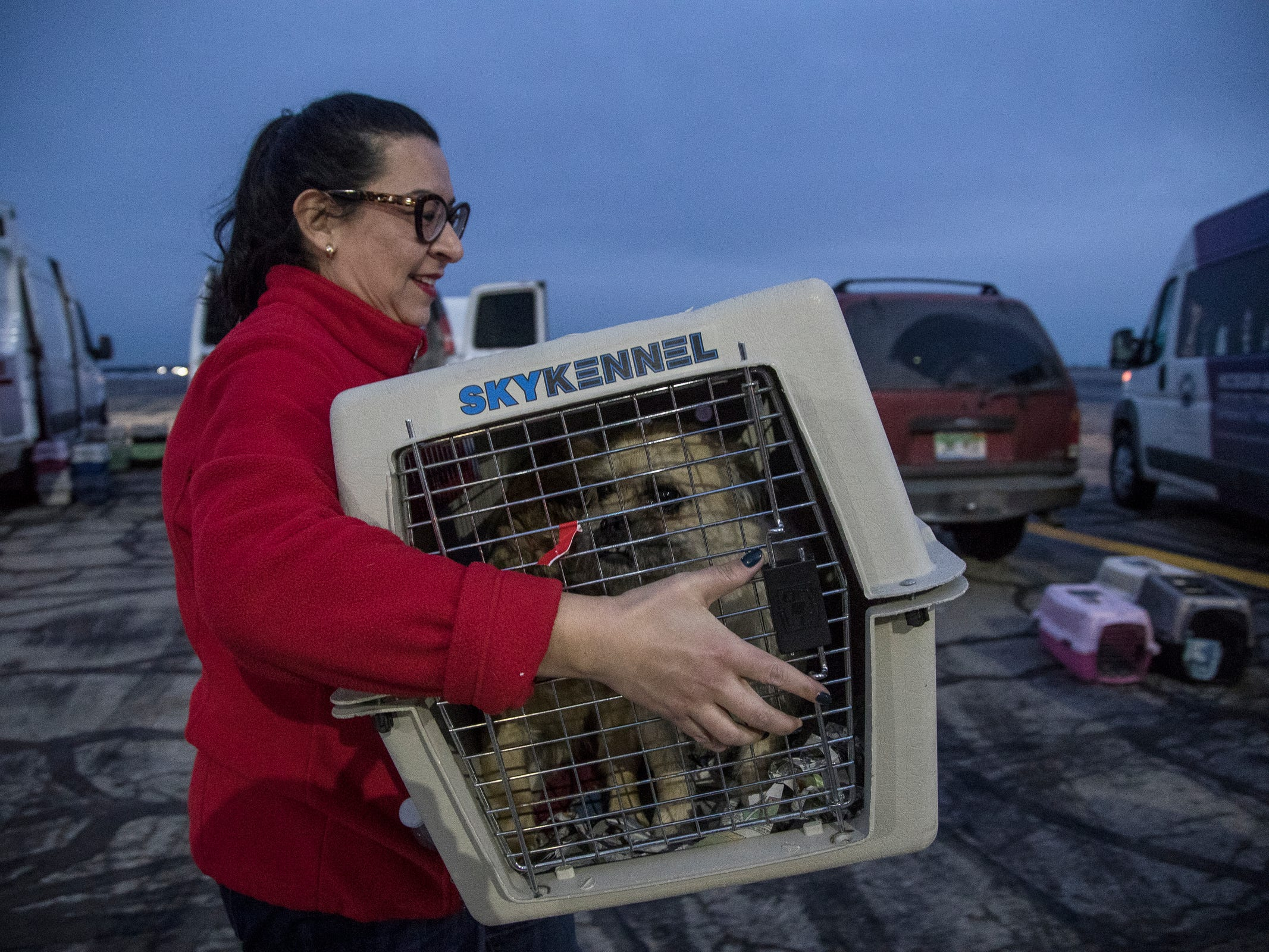 Paula Durant, a Michigan Humane Society staff, carries a crate of rescue dogs off the plane at Willow Run Airport in Ypsilanti Township, Thursday, Feb. 14, 2019. Around 91 rescue dogs flew in from Fresno, Calif. to get adopted at one of the metro Detroit Michigan Humane Society facilities.