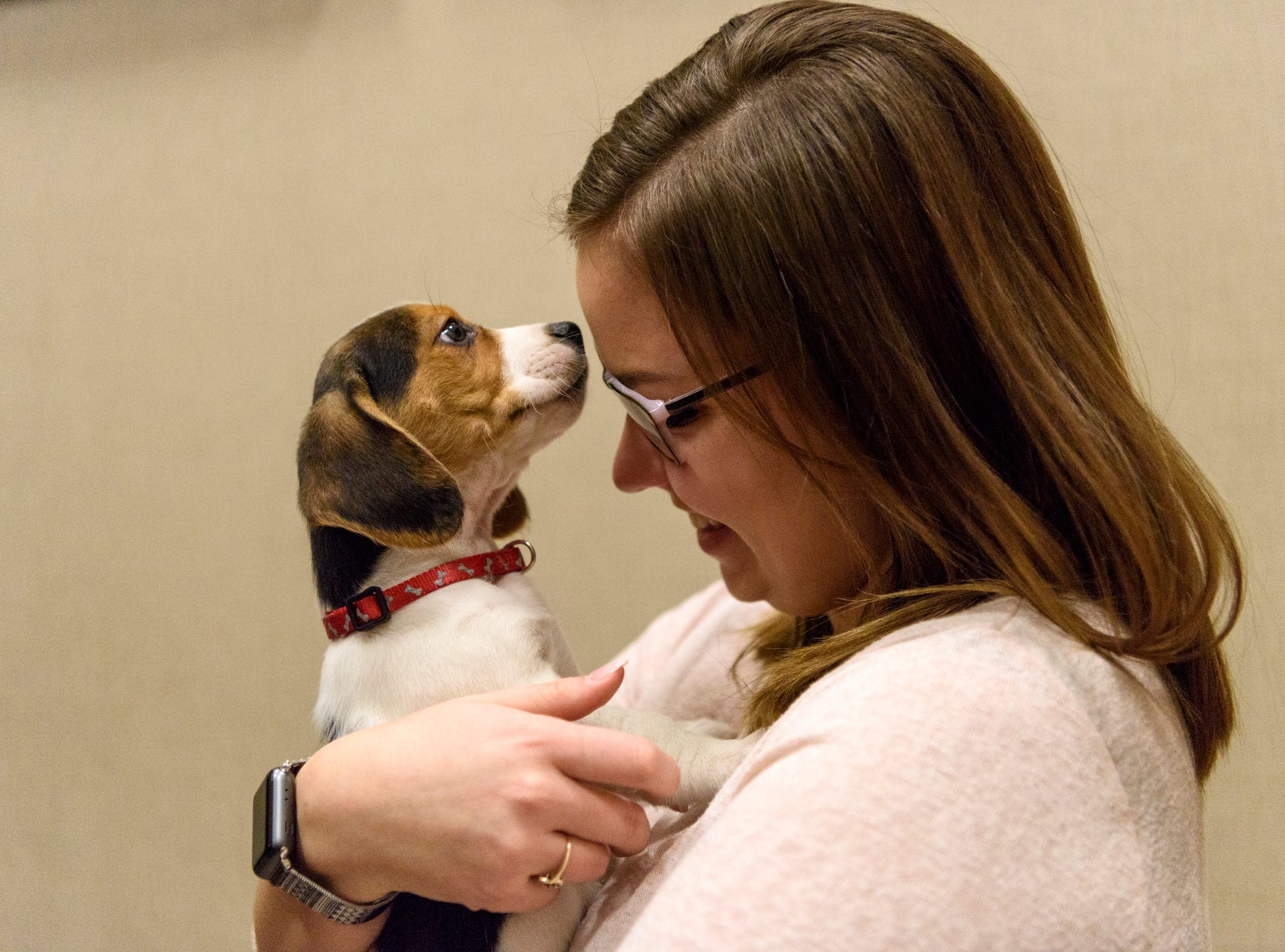 Emily Grace snuggles with Prince, an eight-week-old Beagle puppy, at Evansville Federal Credit Union, Thursday morning, Feb. 14, 2019. Her co-worker, Megan Martin, received a Vanderburgh Humane Society Cuddlegram from her husband which included a 30-minute snuggle session with the puppy.