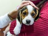 Vanderburgh Humane Society raised over $3,000 by offering puppygram, kittengram and bunniegram deliveries on Valentine's Day.