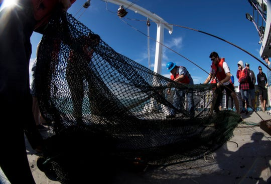 Florida Gulf Coast University students and professors in the oceanography and marine chemistry classes sort through pull an otter trawl from the floor of the Gulf of Mexico during a research trip off of the coast of Fort Myers on Thursday 2/14/2018. The students took part in field measurements related to water quality which included looking at sediments, water sampling, otter trawl and dragging plankton nets. The trip took place on the state's research vessell Hogart. It  replicated the tracks they took last fall when they documented a large area of low dissolved oxygen, i.e., hypoxia, on the bottom. The idea is to assess current conditions. The group is doing three trips. One off the coast of Naples, one off the coast of Fort Myers and one off the coast of northern Sanibel
