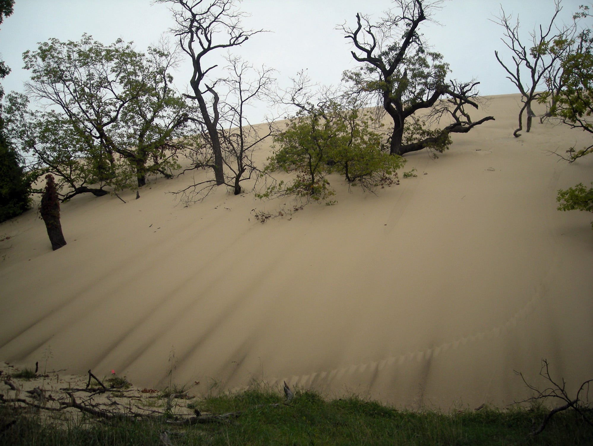 Trees are buried in sand at Mount Baldy at Indiana Dunes National Lakeshore. Some experts theorize that decomposing trees are creating holes in the dunes.