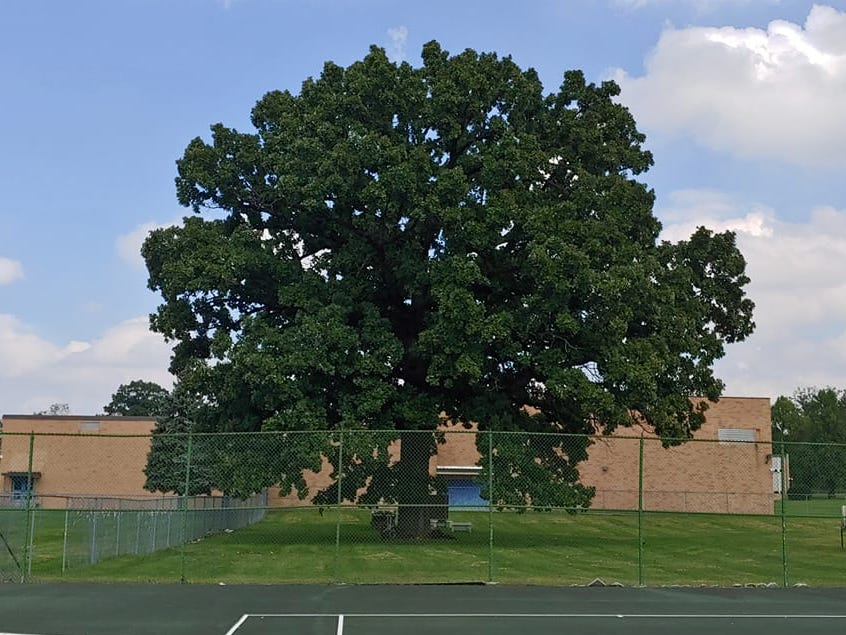Saved from the saw: Fabled 200-year-old tree at Eastwood Middle won't be cut down for parking