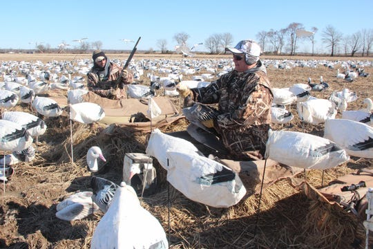 "Pat Gerbensky (right) of Genesee, Wisconsin holds a snow goose while on a hunt in Arkansas with a group of Wisconsinites, including Jim Lechner (left) of East Troy, Wisconsin. The hunt was part of a ""conservation order"" issued by Arkansas natural resources officials to help  reduce the number of snow and Ross's geese."