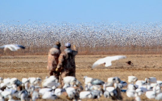 Two hunters watch as a flock of several thousand light geese, mostly snow geese and Ross's geese, shuffles in an adjacent field in northern Arkansas.