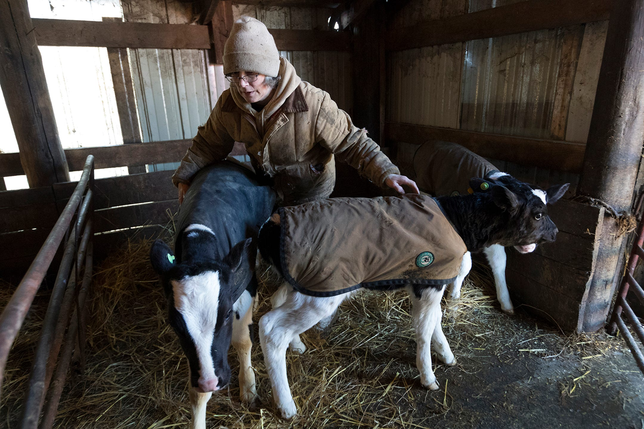 Wisconsin dairy farms are failing as milk prices fall