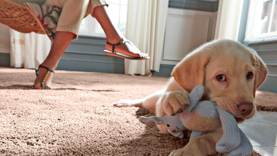 Carpet has evolved along with our lifestyles, and manufacturers know how much we love our furry, four-legged friends.
