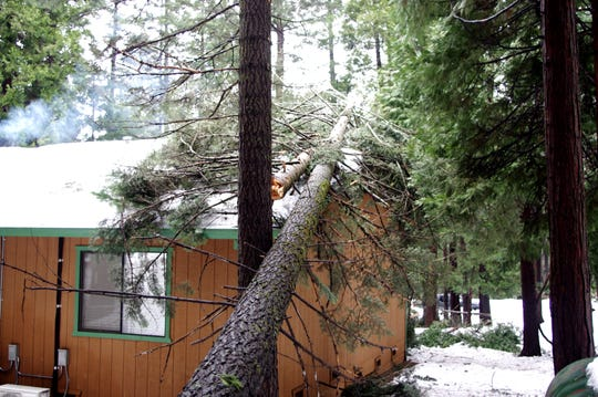 During Tuesday's storm a tree fell on Mike and Charlott's home in Shingletown.