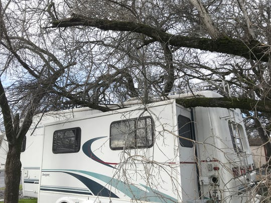 Julie Braden noticed Friday morning that tree branches had broken off and fell on top of her fifth-wheel trailer off Lake Boulevard in Redding following this week's powerful snowstorm.