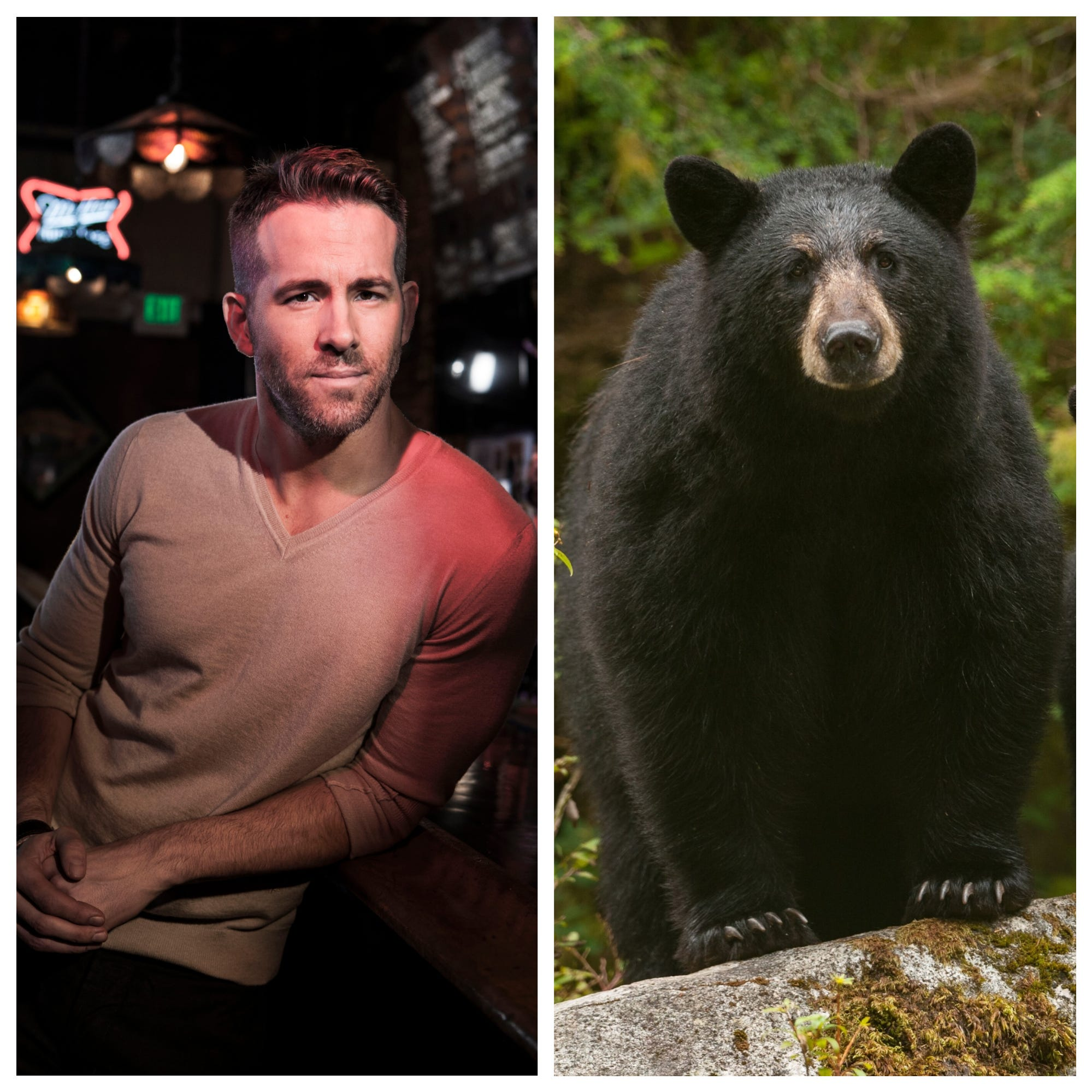 "Ryan Reynolds and a black bear from ""Great Bear Rainforest."""
