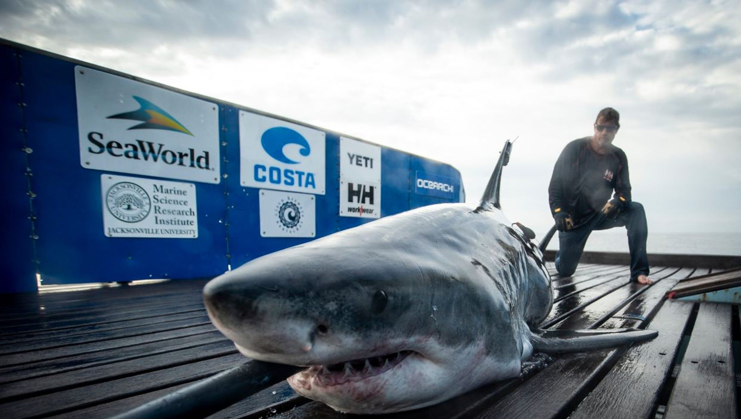 Great white shark pings off Satellite Beach — on Cinco de Mayo