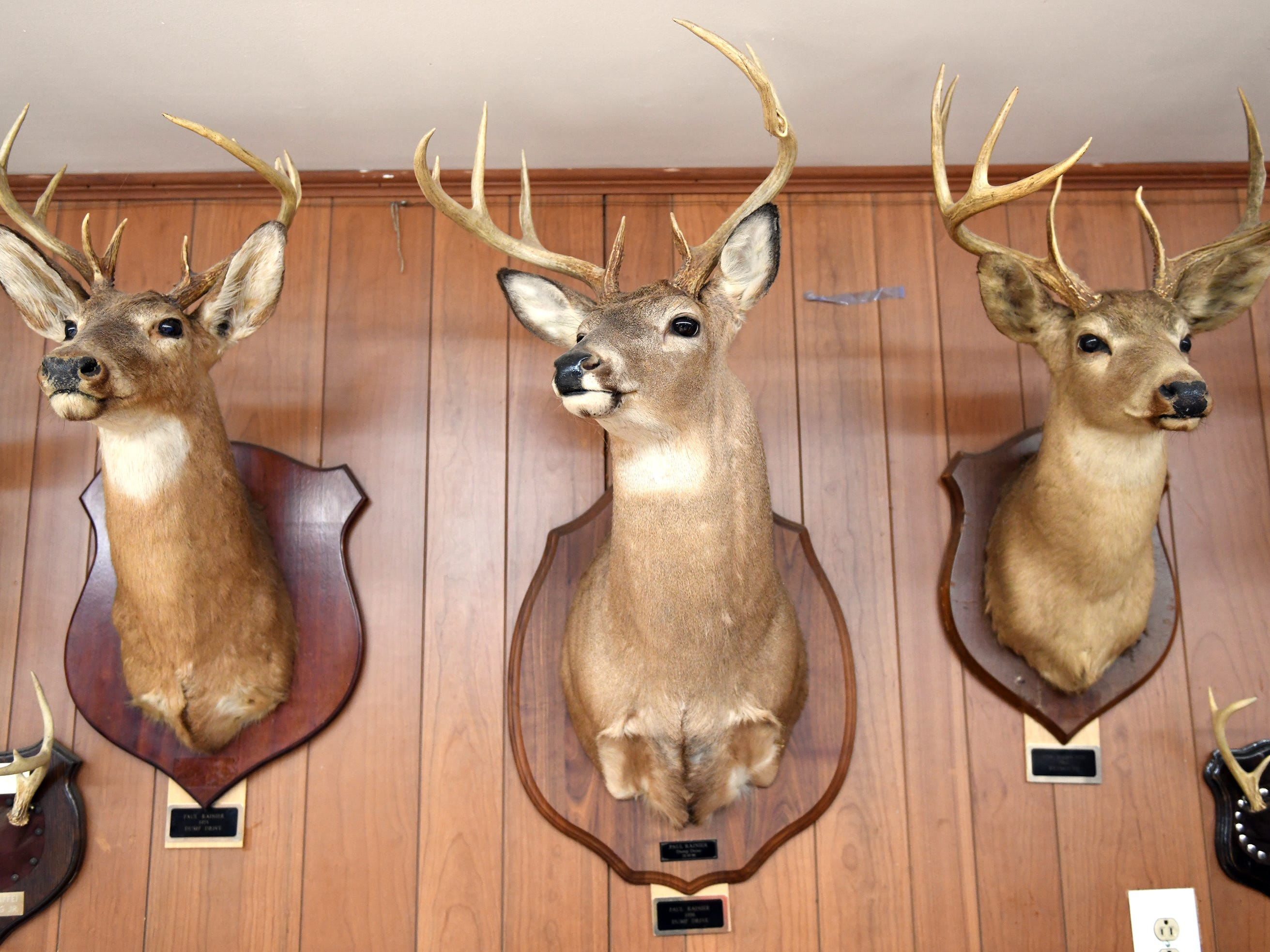 Deer mounts adorn the walls at the Inskip Antler Hunting Club in Winslow Township on Saturday, Feb. 16, 2019. The club hosted The First Annual Family Squirrel Classic while activists protested from across the street.