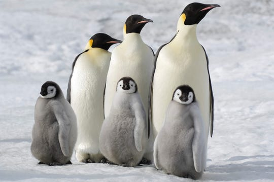 """March of the Penguins 2"""