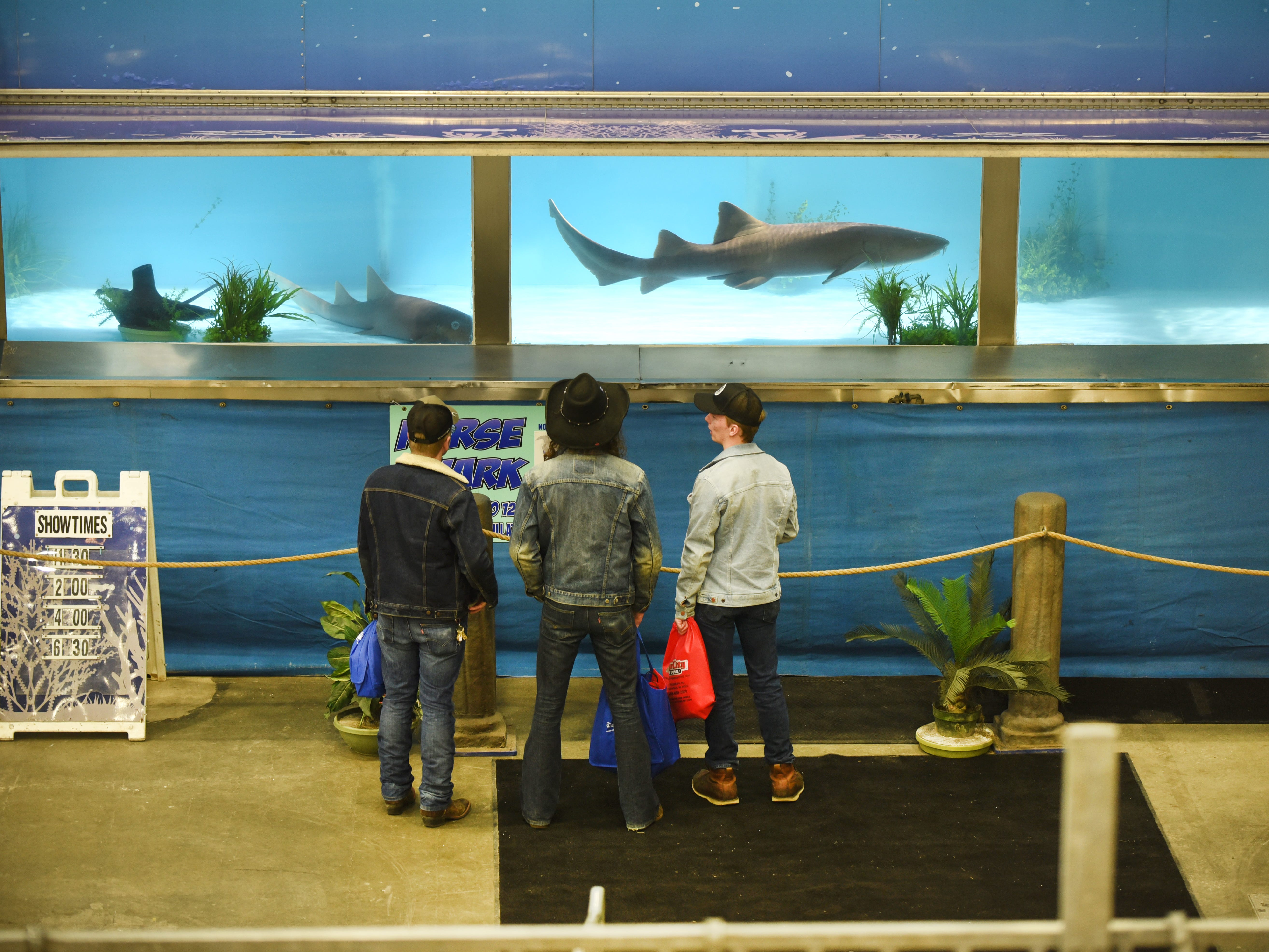 A Nurse shark is a crowd favorite the Detroit Boat Show at Cobo Center on Saturday, February 16, 2018.