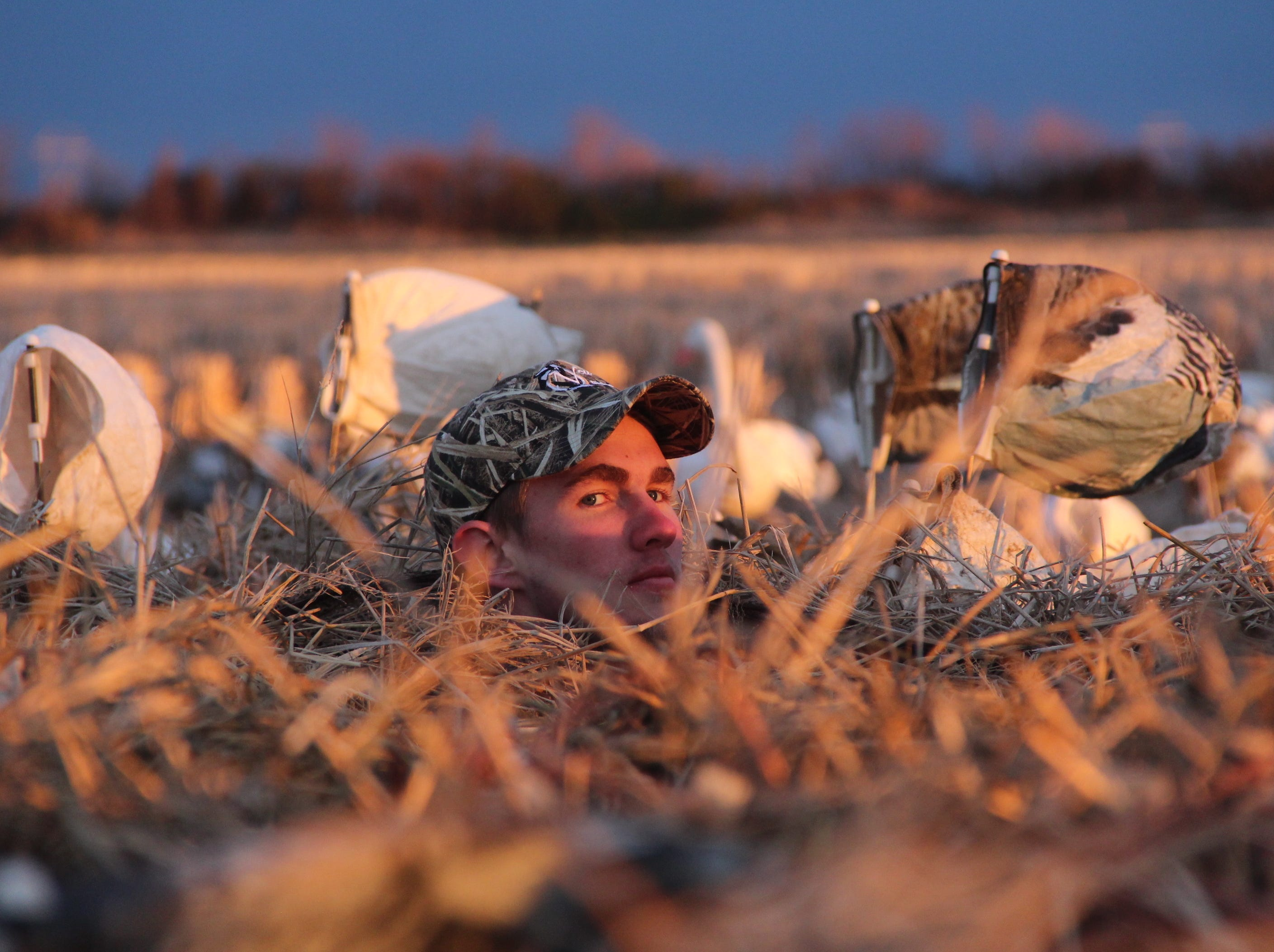 Jake Lechner looks out from a layout blind shortly after sunrise.