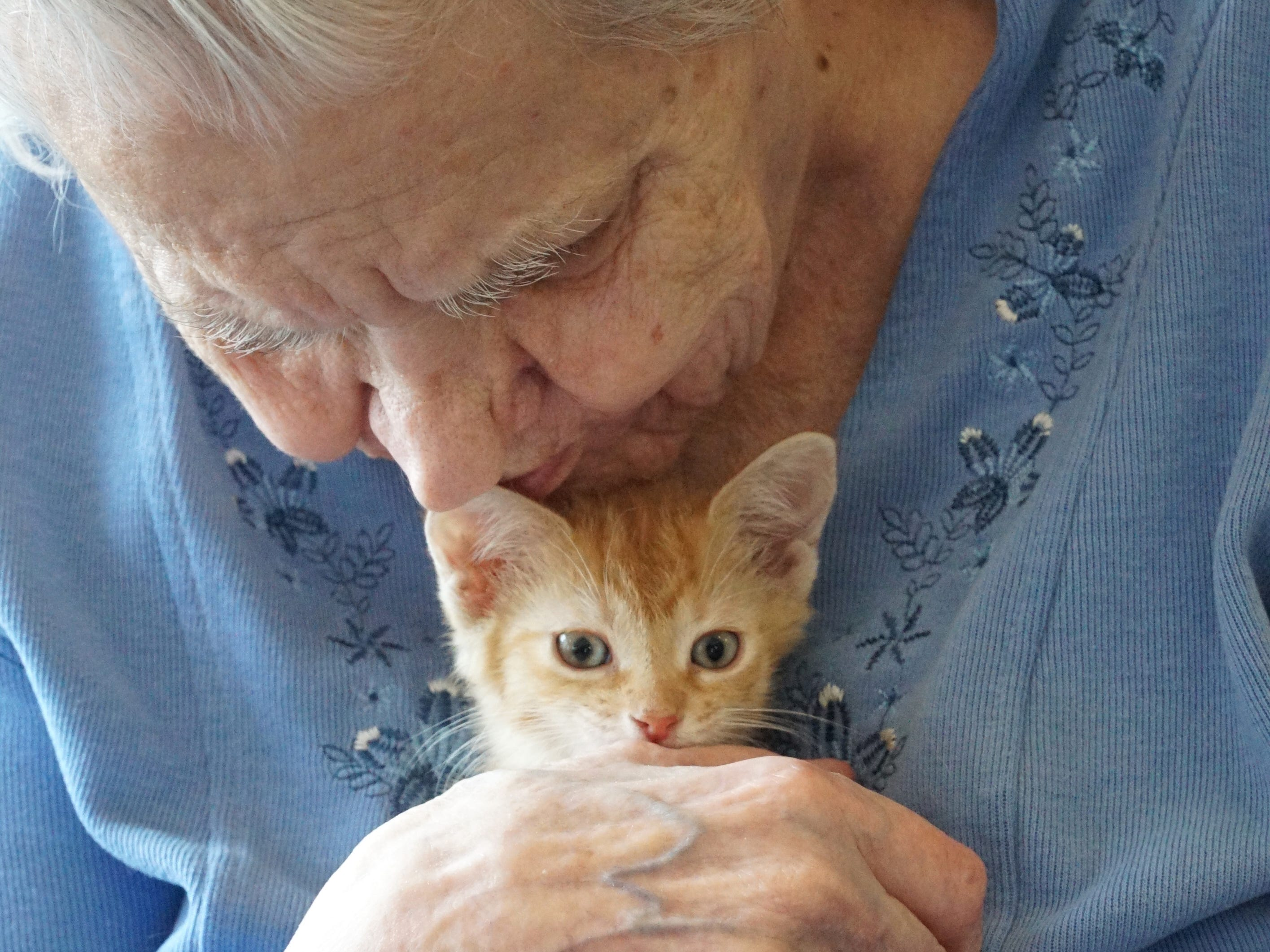 Connie Hunter gives a little kiss to the ear of a kitten that's visiting her and South Lyon Senior Care and Rehab on Feb.16. Volunteers from Feral Kitty Trappers brought a bunch of cats and kittens to the center that day so that the residents could cuddle a kitten and pet a cat if they wanted.
