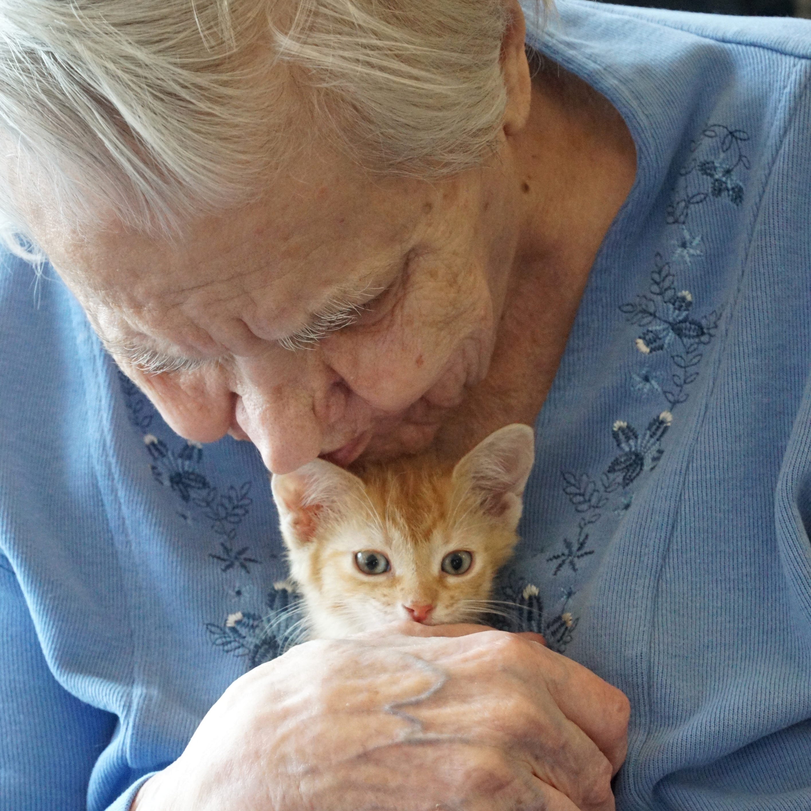Cat-a-tonic: South Lyon seniors get a purrfect prescription for feline therapy