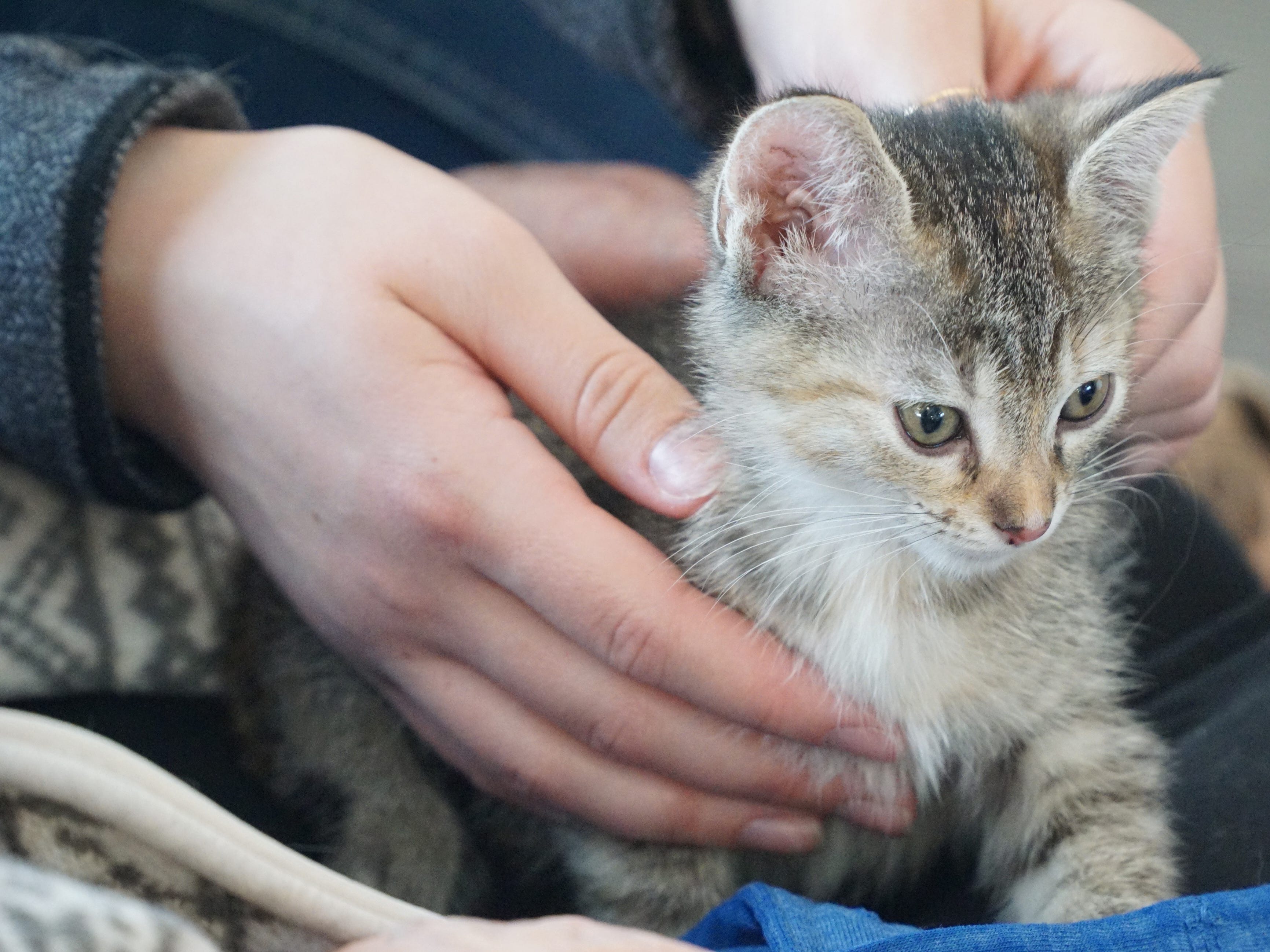 A kitten sits in the lap of Dorothy Swan at South Lyon Senior Care and Rehab.