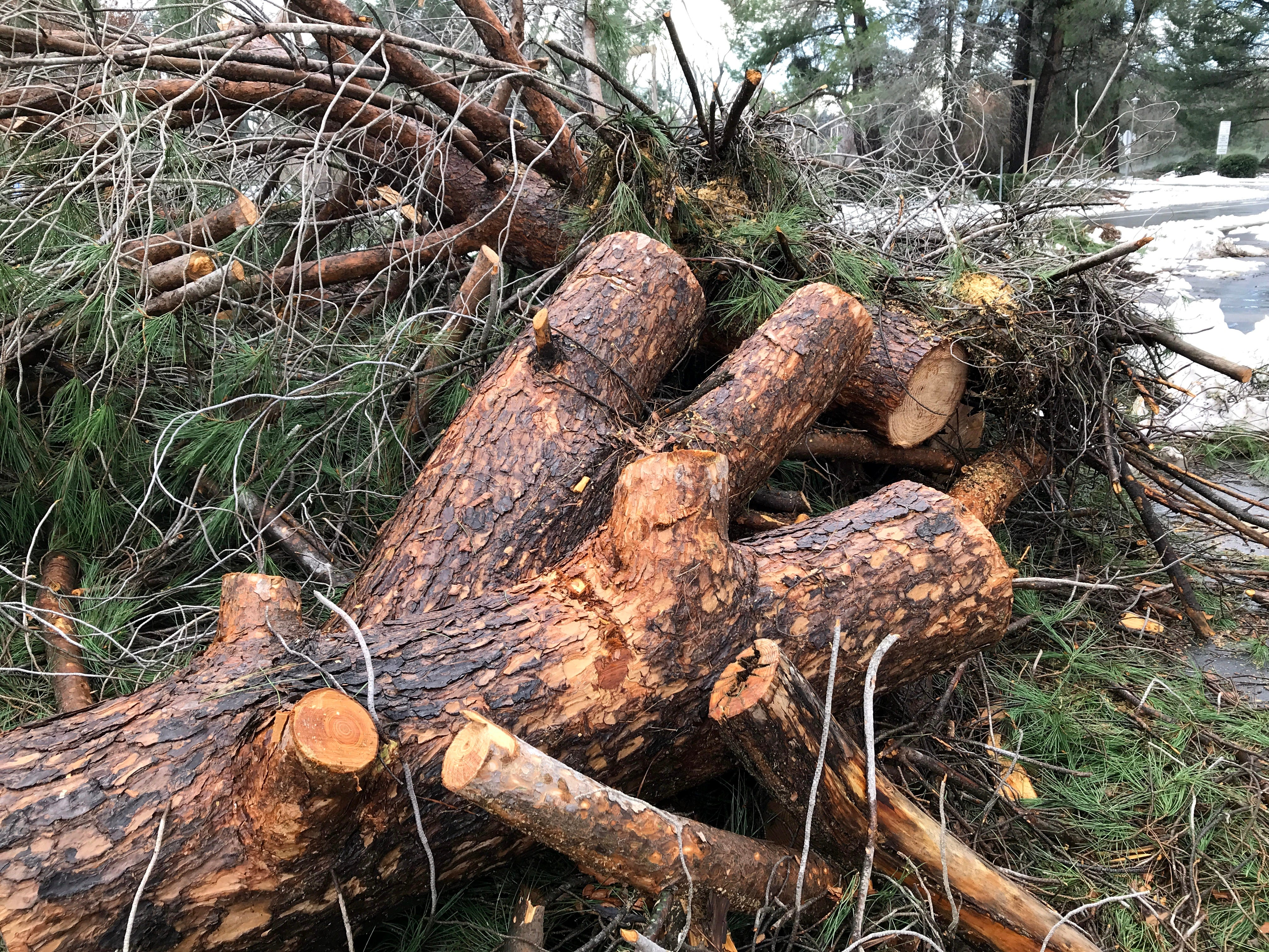 Trees that fell in Redding's Caldwell Park sit cut up in a pile ready to be hauled away Thursday following the snowstorm.