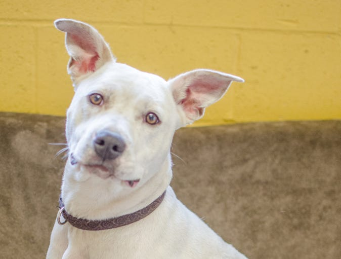 """Sunny is an 11-month-old mixed-breed female. She already knows basic commands like """"sit"""" and """"down"""" and can't wait to learn more. Sunny loves to snuggle with her people. Sunny would do best in households with older kids, and she will need to meet any dog friends before she goes home. To find out more, call Willamette Humane Society at 503-585-5900 or visit www.whs4pets.org."""