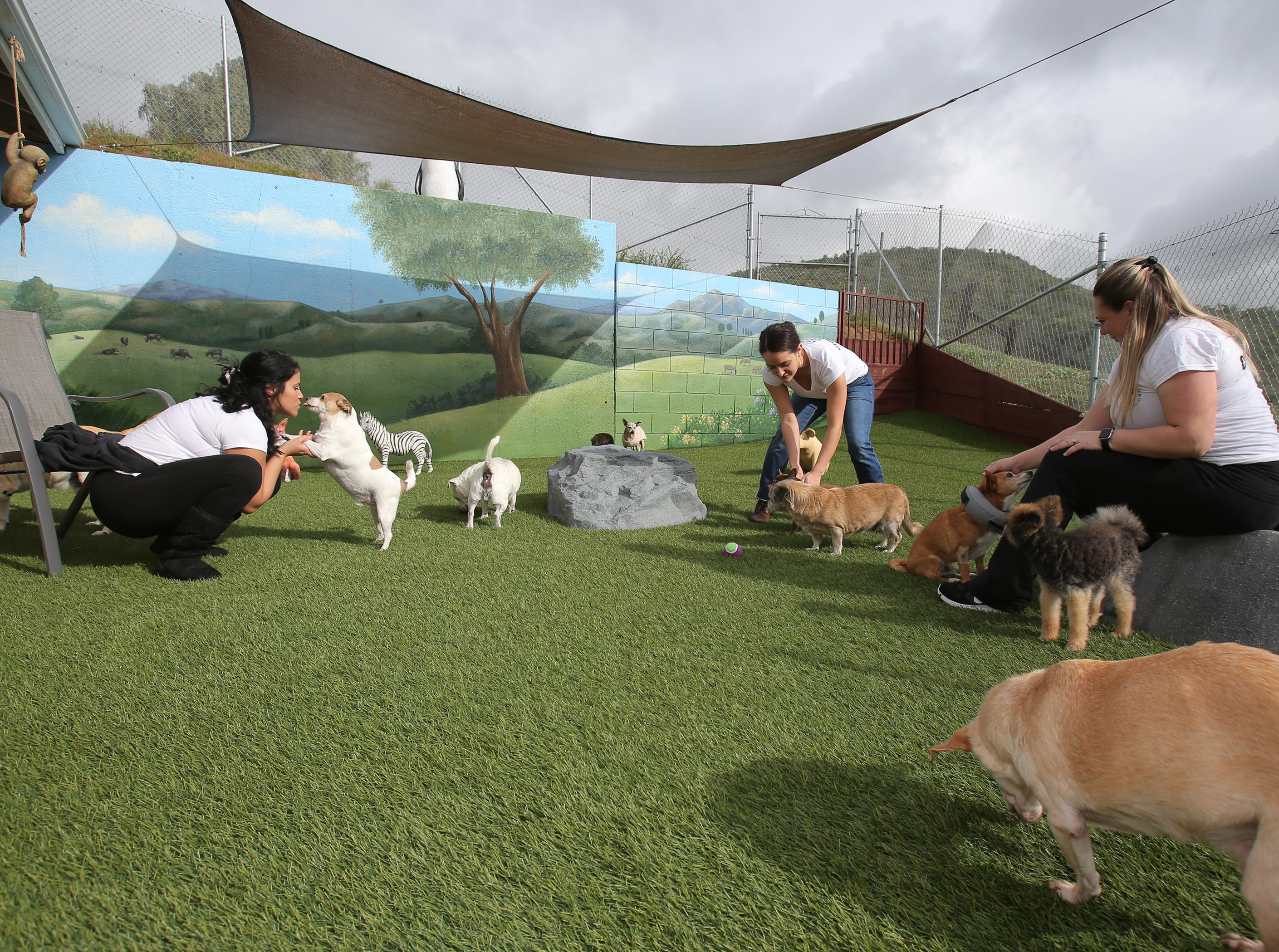 Patty Shumway, from left, Gabby Bonilla and Danielle Lady play with some of the dogs at  Wise Tails, a senior dog sanctuary in Simi Valley.