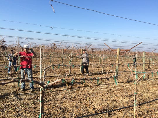 A crew of farmworkers contracted by Joe Garcia's team tends to a vineyard.