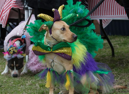 The Krewe of Paws Pet Parade will stroll down Antique Alley in West Monroe Saturday.