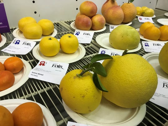 Homegrown fruit is on display inside the Taj Mahal at the Riverside County Fairgrounds.