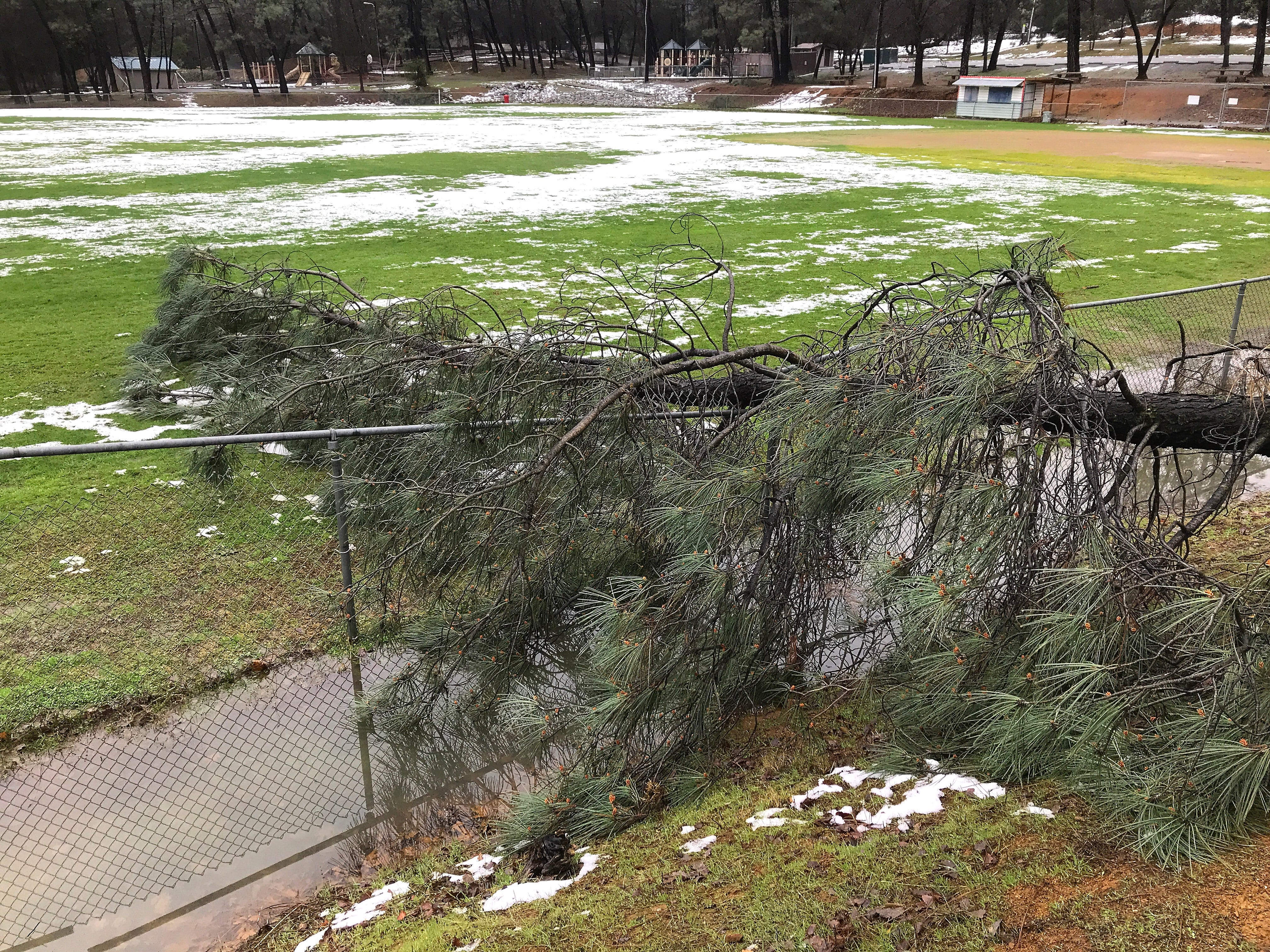 A tall tree lays over a fence at the soccer field in Margaret Polf Park in Shasta Lake on Thursday, Feb. 14, 2019,